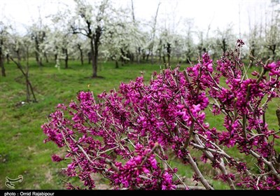 Under Specter of Coronavirus, Iranians Celebrate Nature Day at Home