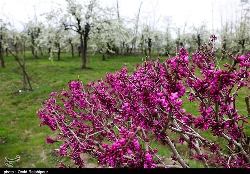 Under Specter of Coronavirus, Iranians Celebrate Nature Day at Home