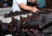 بازارهای فروش خفاش و سگ در چین مجددا بازگشایی شد!
