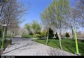 """"""" زندگی دوباره"""" هدیه مردم بام ایران در روز طبیعت؛ همه در خانه ماندند"""