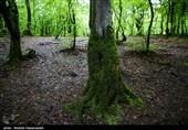 راهکار تازه فناوری برای یافتن اجساد در جنگل