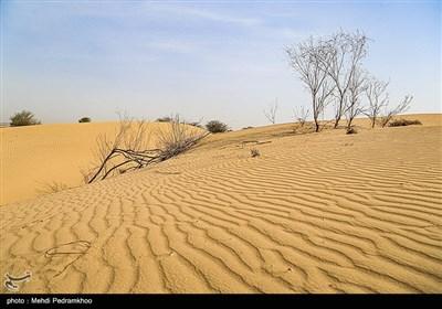 زیستگاههای بیت کوصر - خوزستان