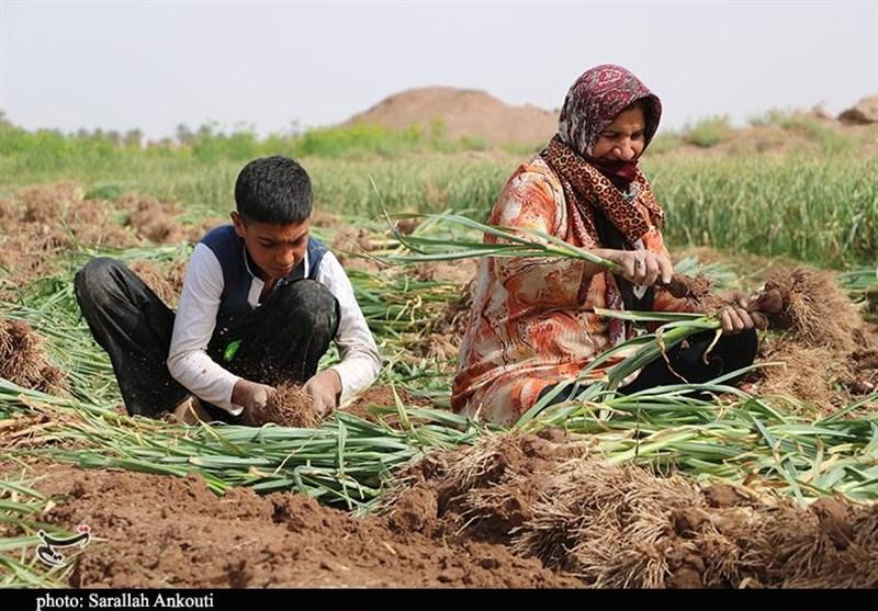 کشاورزی ، استان کرمان ، تولید ملی ،