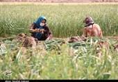 راهبردهای کلان برای مدیریت بحران کرونا در جامعه کشاورزی اعلام شد