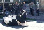 ماجرای فردی که با گاو به بانک رفت چه بود؟/ بانک ملی پاسخ داد