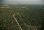 1.5 میلیون تن انواع محصولات کشاورزی و دامی در استان بوشهر تولید شد