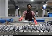 سرانه مصرف ماهی در آذربایجان شرقی نصف میانگین کشوری است / بسترسازی سرمایهگذاری زالو و کروکودیل در استان