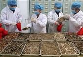 """بازخوانی// استفاده 92 درصدی چین از طب سنتی برای مهار کامل کرونا/ میزان استفاده از """"طب سنتی"""" در بیمارستانهای ایران همچنان """"صفر!"""""""