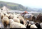 گرمای بیش از حد خراسان جنوبی عشایر کوچنده را به سیستان برگرداند