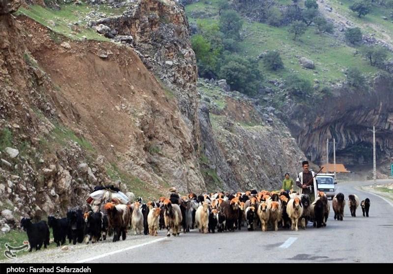 کوچ بهاره 28 هزار خانوار عشایر فارس با تدابیر کرونایی آغاز شد