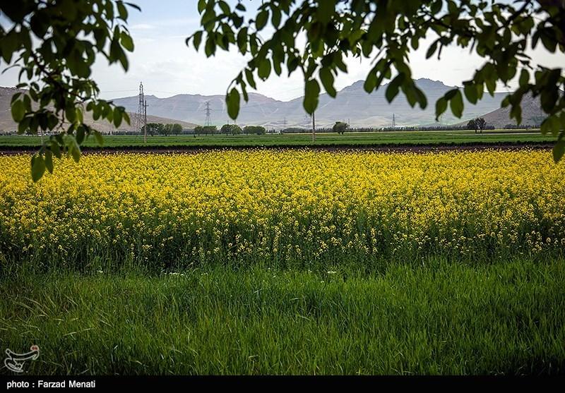 کالاهای اساسی , وزارت جهاد کشاورزی , واردات ,