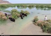 سیستان و بلوچستان| سومین مرحله از حقآبه هامون بهزودی وارد تالاب میشود