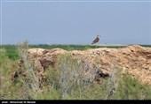 شکار پرندگان مهاجر تا 2 میلیارد ریال جریمه دارد