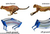 Researchers Build World's Fastest 'Soft' Robot by Mimicking Cheetah Movement