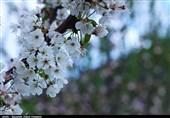 شکوفهها و طراوت طبیعت بهاری آذربایجان شرقی به روایت تصویر