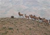 حضور ایران در کنفرانس تنوع زیستی سازمان ملل/بررسی استراتژی 10 ساله جهان برای حفاظت از طبیعت