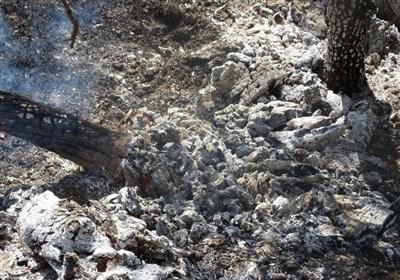 خطر آتشسوزی جنگلها و مراتع کهگیلویه وبویراحمد را به شدت تهدید میکند