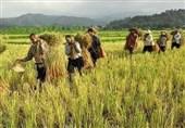 سازمانهای متولی آب علیه کشاورزان کاشانی اقدام میکنند