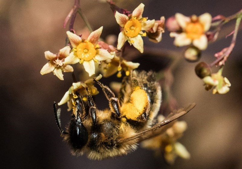 Bees Trick Plants into Flowering Early by Biting Them