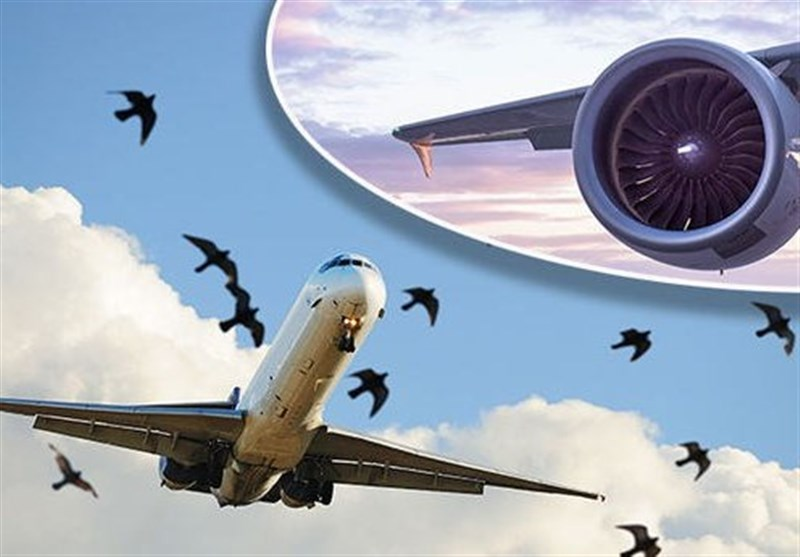 گزارش اولیه سقوط هواپیمای پاکستانی منتشر شد/ برخورد دسته پرندگان با هواپیما یکی از علل سقوط