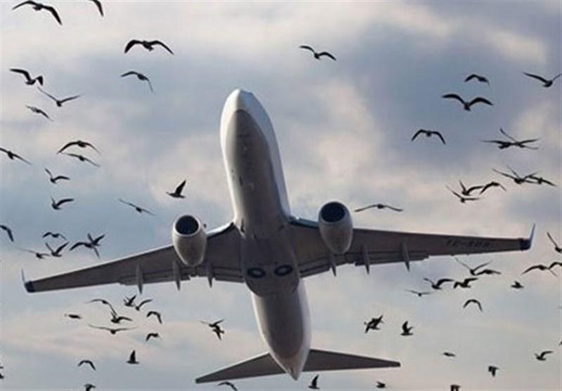طیارہ حادثہ پرندے ٹکرانے سے پیش آیا، ابتدائی رپورٹ
