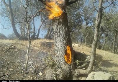 نابودی جنگلهای استان مازندران در یک سهل انگاری ساده/ کسی نیست تا نبض حیات جنگلهای هیرکانی را بگیرد + فیلم
