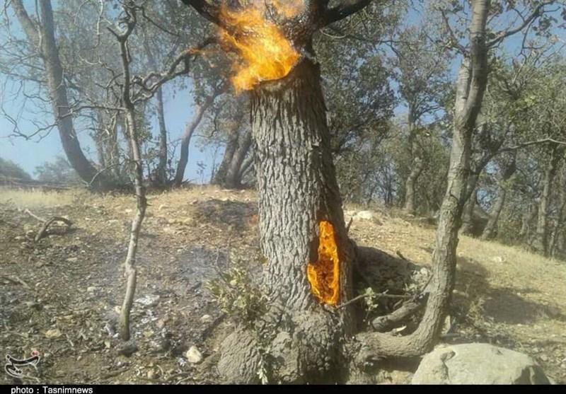 جنگلهای گچساران همچنان در آتش بیتدبیری میسوزد/ یک قدم تا فاجعه زیست محیطی در «دیل»