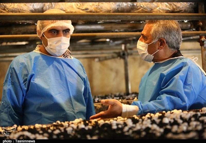 کرونا مصرف قارج را 30 درصد افزایش داد/ از دستفروشان قارچ نخرید