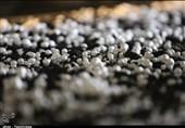 توزیعکننده قارچهای خوراکی فاسد بازداشت شد