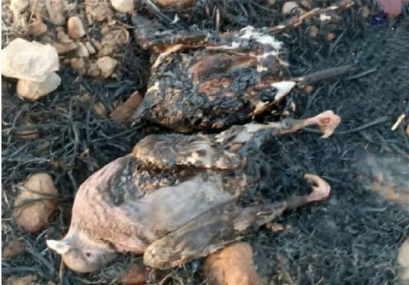 گزارش|فاجعه زیستمحیطی در خائیز/ بحران در بحرانِ کهگیلویه و بویراحمد/گونههای جانوری که زنده زنده میسوزند