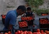 یک گروه جهادی با حذف دلالها، محصولات کشاورزی کرمانیها را به قیمت فروختند+ فیلم