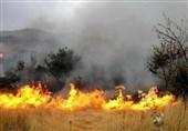 منطقه حفاظت شده «خائیز» کهگیلویه در میان زبانههای آتش گرفتار شده است + فیلم