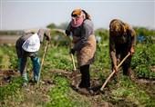 یادداشت اقتصادی| ضرورت توسعه روستایی با محوریت آبخیزداری
