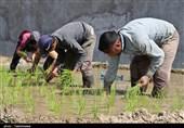 «معجزه آبخیزداری»|ایجاد اشتغال پایدار با توسعه آب بندان ها در استان های شمالی کشور