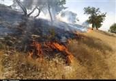 آتشسوزی به 100 هکتار از مراتع جنگلی بافت خسارت زد؛ 500 اصله درخت ارس طعمه حریق شد