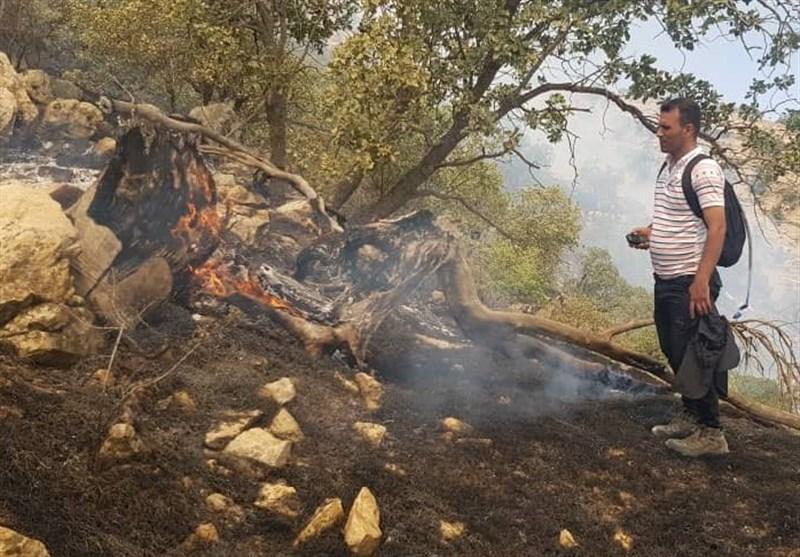 کهگیلویه و بویراحمد| آتش سوزی در جنگلها و مراتع گل اسپید مارگون به روایت تصویر