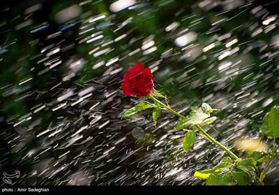 به مناسبت روز گل و گیاه
