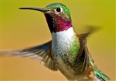 Hummingbirds Can See Colors Humans Can Only Imagine