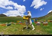 اقتصاد بدون نفت| زنبورداری خراسان شمالی به روایت تصاویر