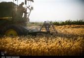 5 میلیون تن گندم کشاورزان را امسال بخش خصوصی میخرد