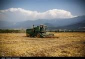 برداشت گندم در استان بوشهر 11 درصد کاهش یافت/ پرداخت 298 میلیارد تومان به کشاورزان بوشهری