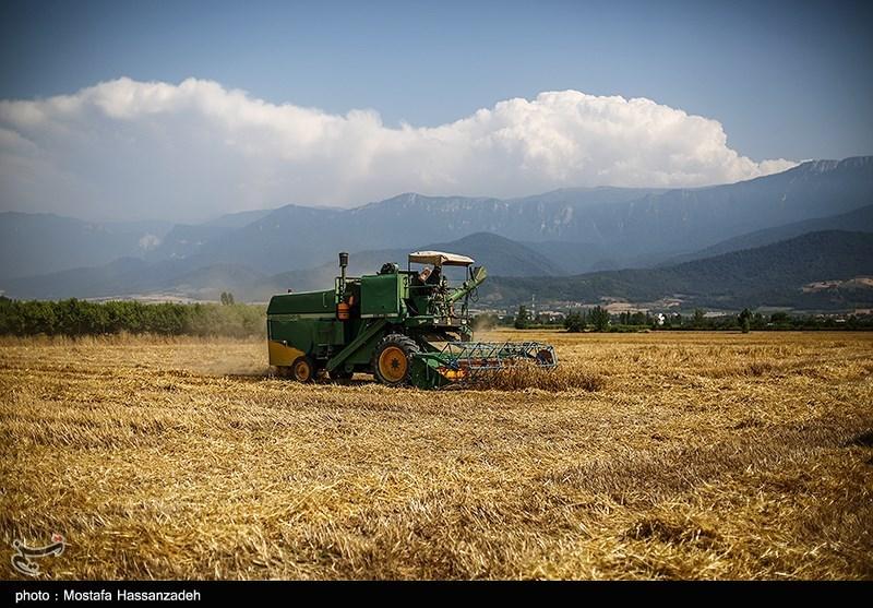 سالانه 5 میلیون تن محصول کشاورزی در استان گلستان تولید میشود