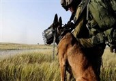 Israel Army Conducts Secret Weapons Tests on Animals: Report