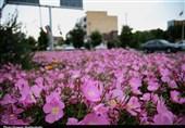 تهران| ناخوشی گلکاران پایتخت گل و گیاه ایران بدون حمایت مسئولان