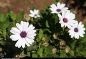 نشاط اجتماعی با گل و گیاههای شهری در قم به روایت تصویر
