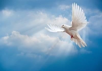 چله عزت  کبوتری که جای ۱۰۰ شهید گمنام را نشان داد