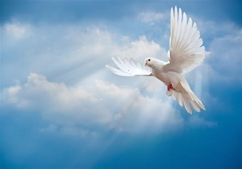 چله عزت| کبوتری که جای 100 شهید گمنام را نشان داد