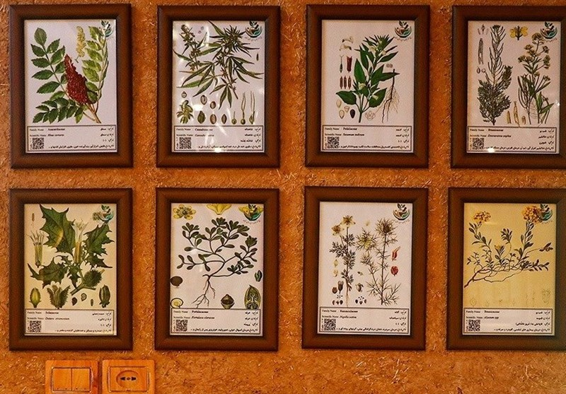 Garden Museum of Medicinal, Aromatic Plants in Zanjan - Tourism news