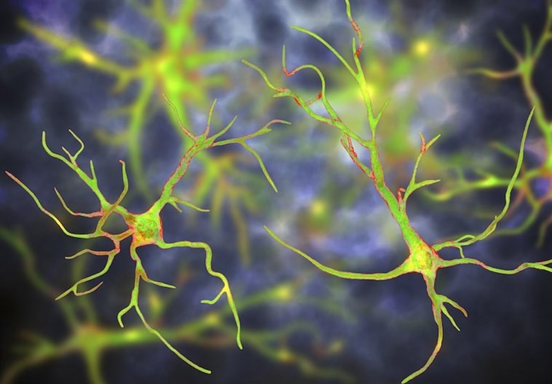 One-Time Treatment Eliminates Parkinson's in Mice