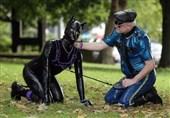 """بیش از 10000 شهروند انگلیسی تبدیل به """"انسان سگنما"""" شدهاند! + تصاویر"""